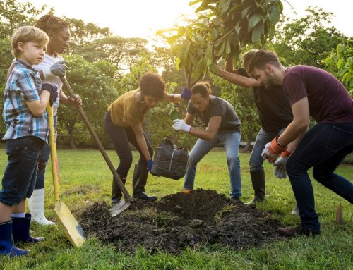 Our Eco-Friendly Tree Planting Initiative Will Change The World!