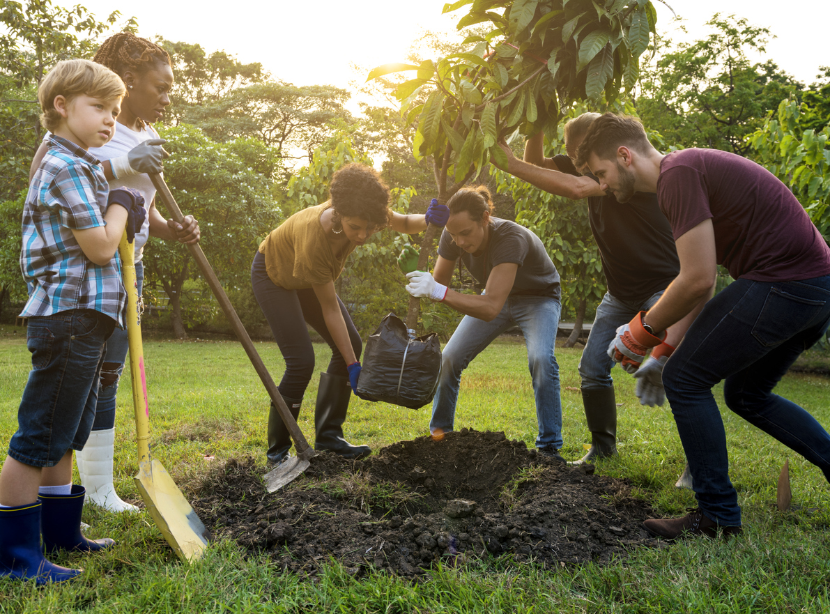 Our Tree Planting Initiative Will Change The World! | DigiHype Media Inc.